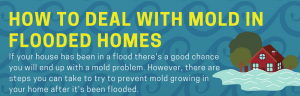 How To Deal With Mold Header